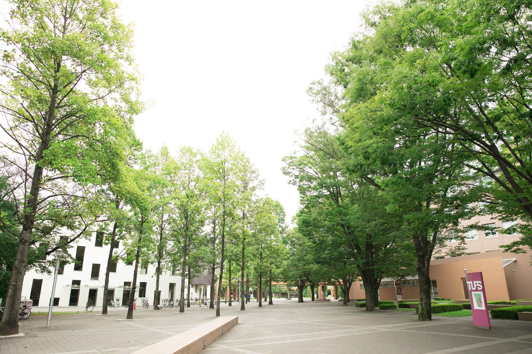 大学 語 東京 外国 【東京外国語大学】国際社会学部の評判とリアルな就職先